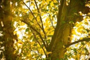 秋分节气选择莲藕银耳雪梨养生止咳润燥润肠通便效果喜人